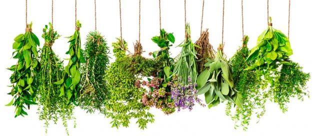 El Ayuntamiento de La Puebla solicta al IFAPA más investigación sobre plantas aromáticas.